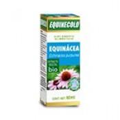 EQUINÁCEA (Echinacea purpurea)